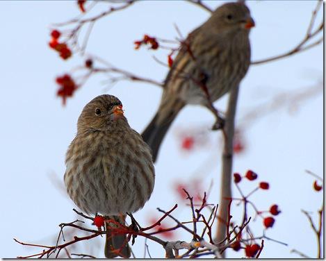 sparrow3a