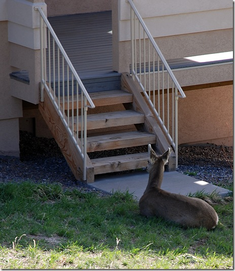 Deer at the door