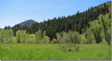 Bear Creek Colorado