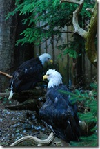 eagles ketchikan