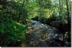 ketchikan creek (2)