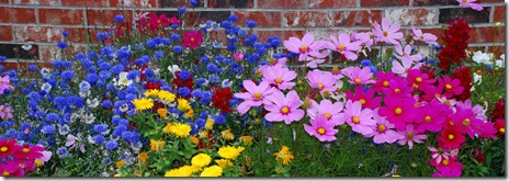 juneau flowers 2