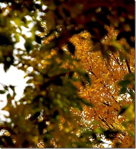 fall trees 2009b