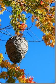 Hive Grand Ledge