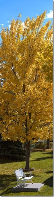 fall 2010web