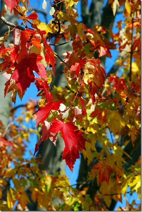 Autumn Grand Ledge