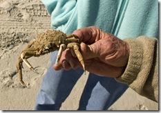 Jax Crab