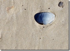Shell on Jax Beach
