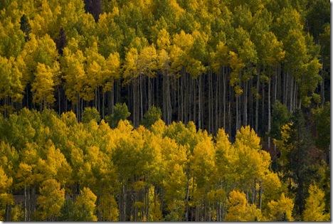 Fall 08 Colorado 4