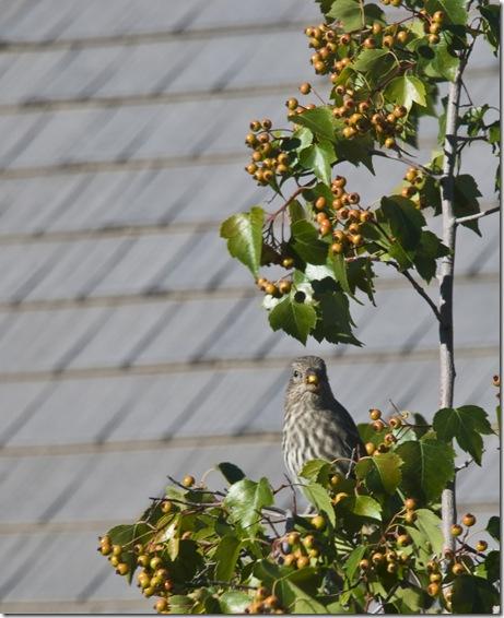 Fall Bird 2008