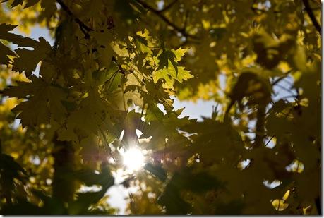 fall2 2008