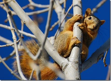 squirrel4c
